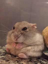 「小動物」の画像検索結果