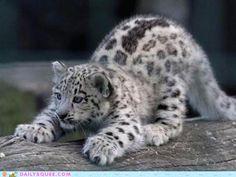 Cloud Leopard Stretch