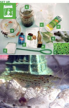Tabletop Biosphere (see how plants & organisms work together) materials for the Shrimp biome