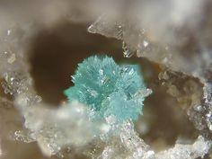 Turquoise. Filon du Mazet, Echassières, Ebreuil, Allier, Département, Auvergne, Region, France FOV=1 mm Photo Jean-Marc Johannet