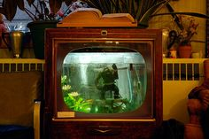 TV aquarium photo by balaclava9