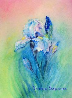 Original watercolor painting iris rainbow flower by VenusSapiens