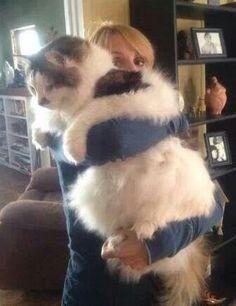 Que gatito...!!