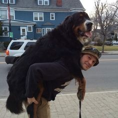 Who are not entirely aware of just how big they are. | 19 Pictures That Prove The Bigger The Dog, The Better