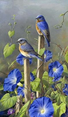 Blue Birds and morning glories | Totaly Outdoors