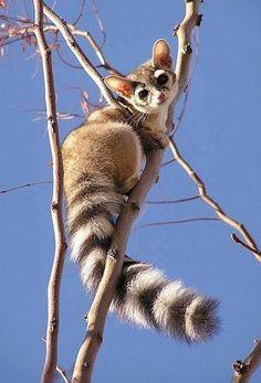Pretty poss with beautiful tail !