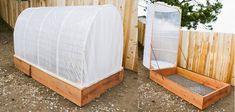 Cómo hacer tu propio invernadero básico para el jardín, paso a paso. Este es un buen sistema para ayudar al crecimeinto de las plantas y poder darles un espacio de desarrollo más apropiado, por ejemplo cuidarlas del exesivo viento, del frio, brindarles una mayor temperatura, otro beneficio es que puedes sembrar semillas con antelación durante … #huertaencajones