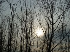 Sun through the trees, #sun