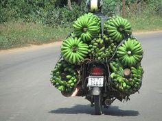 Bananas about bananas?