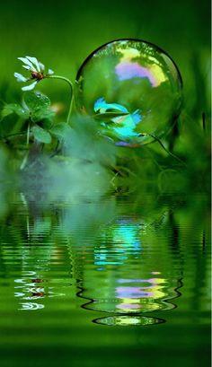 //Nature's reflection #green