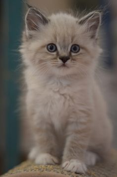 .fluffy and cute
