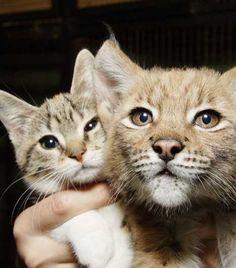 A Tale Of Zoo Kitties: Stray Cat