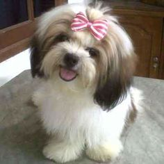 #puppies awww...just like Dulce❤