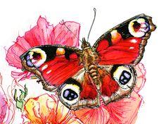 Butterfly Guide on Behance