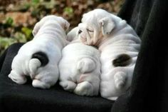 Three little tails, all in a row.  Oh, oh!