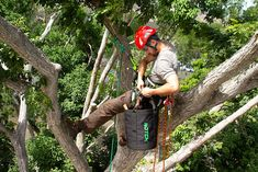 The Dangers of Tree Work 4 Questions You Should Ask Before Hiring an Arborist Fall Arrest System, Tool Pouch, Tree Company, Online Reviews, Work Tools, Home Repair, Things To Come, Garden, Garten