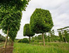 #parkertech #kerteszet #faiskola #debrecen #gardenart #gardening #nursery #horticulture #park #garden #technology #nature #shaped #plants Park, Country Roads, Gardening, Plants, Collection, Lawn And Garden, Parks, Plant, Planets