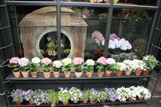French flower shops inspire photos by J Whitson/gardenvarietydesign French Flowers, Cut Flowers, Flower Shops, Paris Apartments, Flower Farm, Floral Design, Floral Wreath, Retail, Inspire