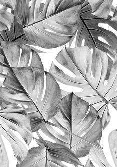 Sample Botanical Wallpaper Monstera Grey by KEK Amsterdam Gray Aesthetic, Black Aesthetic Wallpaper, Black And White Aesthetic, Aesthetic Iphone Wallpaper, Aesthetic Backgrounds, Aesthetic Wallpapers, Flower Aesthetic, Grey Wallpaper Iphone, Of Wallpaper