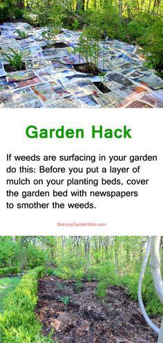 use newspapper to smother weeds- gardening hacks