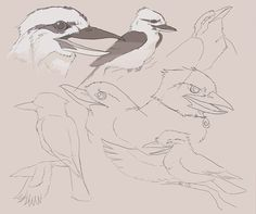 More character/animal sketches for my book. Kookaburras are fun to draw. Animal Sketches, Animal Drawings, Australian Birds, Draw On Photos, Various Artists, Bird Art, My Books, Sculptures, My Arts