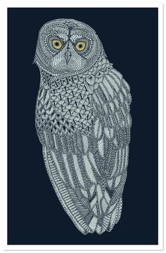 owl by Claire Scully