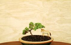 Grazing Under Bonsai