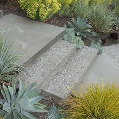 I want to work in aloe and bromeliads around both steps.  Outdoor Photos Wood Steps With Concrete Patio Design Ideas, Pictures, Remodel, and Decor