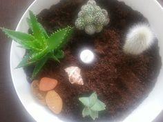 Looooooove cactus!!!