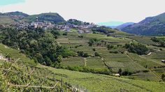 Scoprire il Trentino: trekking tra i vigneti della Val di Cembra ~ Viaggi e…