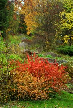 Fall in Andrey's garden in Russia--Click through to see more!