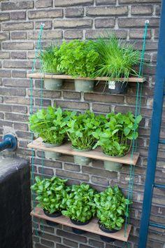 Amazing 33 Unordinary Indoor Herb Garden Design Ideas To Try Asap Balcony Herb Gardens, Vertical Herb Gardens, Small Herb Gardens, Outdoor Gardens, Hanging Gardens, Balcony Gardening, Gardening Tools, Flower Gardening, Apartment Herb Gardens