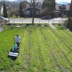 Agricultura urbana o cómo comenzar un negocio agrícola en el patio de casa