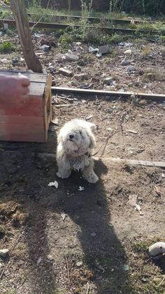 Cei care mai tin cainii in lant vor fi amendati. Mai, Pets, Animals And Pets