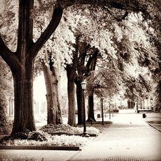 The University of South Carolina Horseshoe