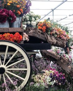 Scrolling through my pictures of @the_rhs #chelseaflowershow and reminiscing about how good it felt to wax lyrical about #britishflowers on the beautiful @flowersfromthefarm stand dreamed up by @fieldhouseflowers. The flowers & the story made thousands of people incredibly happy and even moved a few to tears. It got me thinking; flowers have such power the power to transform both physical spaces and perhaps more surprisingly feelings. Floral fragrances can transport you back to a single…