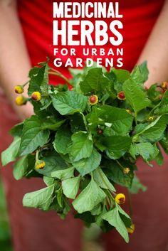 7 Medicinal Herbs fo