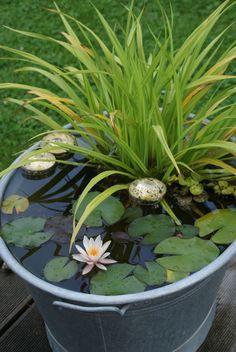 Galvanized bucket water garden ideas | Steel tub water gardens | www.ContainerWaterGardens.net #watergarden