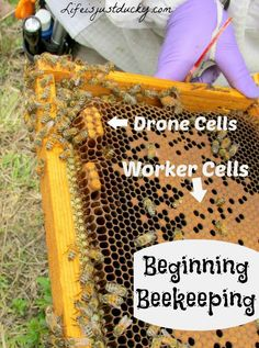 So you want to start beekeeping. Here are 10 things to know before you begin.  Like how much time it will take and how much your new apiary will cost. Before you get your first bee hive, check out this list. #10 is really something to think about.