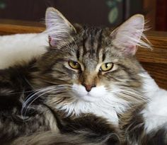 Cat of The Day July 19, 2015 http://www.freebiecat.com/cat-of-the-day.php
