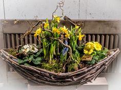 Das geschulte Auge sieht den Frühling! ;-) #Pflanzung #Frühling #Narzissen #Aufmunterung #Floristik #Korb EBK-Blumenmönche Blumenhaus – Google+