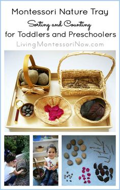 Ideas for a nature walk along with a Montessori nature tray for sorting and counting ... for toddlers and preschoolers at home or school