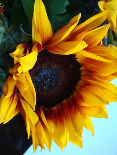 sunflower-- They make me smile!