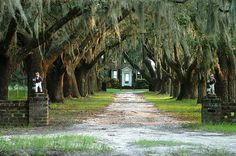 my heart has a special spot dedicated to my love for spanish moss and live oaks