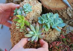 """""""Discovering succulents was the best thing that has happened to me in terms of gardening and design."""" – Jessica St. Hilaire"""