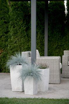 Flower Pots, Concrete, Container Plants, Flower Planters, Cement