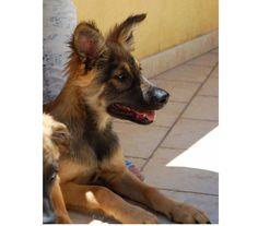 Una casa per Masha Firenze - Adozione cani e gatti