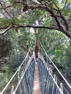 En Taman Negara, el puente colgante recorre 300 metros por encima de los árboles, lo que te da la oportunidad de obtener una visión diferente de lo que te rodea.