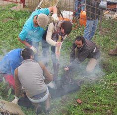 torodigital: Mañana de herradero en el campo charro,ganadería ...