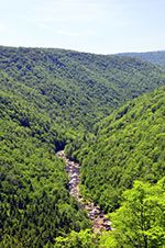Blackwater Falls Gorge